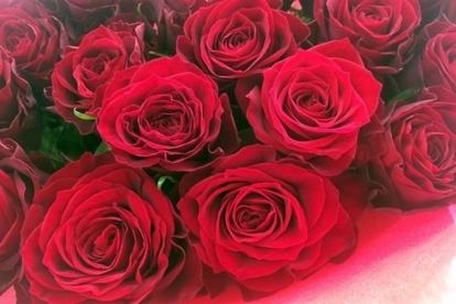 _free_rose.jpg
