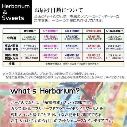 bmhpremium_herbariumset06_6.jpg